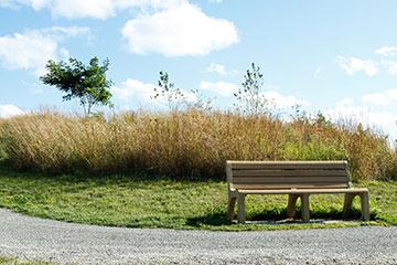 Webb Bench